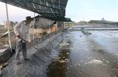 Buscan convertir a Bac Lieu en centro de industria camaronera de Vietnam