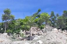 Provincia vietnamita de Ninh Thuan promueve protección de bosques