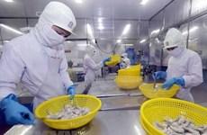 Aumentan exportaciones de camarones de Vietnam a Corea del Sur
