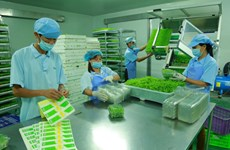Provincia vietnamita de Vinh Phuc impulsa desarrollo de industria de procesamiento