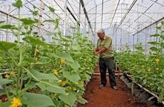 Fortalecen negocios sostenibles en Vietnam para elevar competitividad en mercado mundial