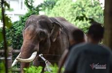 Zoológico de Saigón recibe toneladas de donaciones de alimentos para sus mil 500 animales