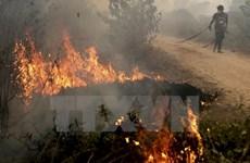 Indonesia intensifica prevención de incendios forestales en estación seca