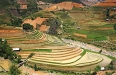 Celebrarán Festival de temporada dorada de arrozales en Quang Ninh