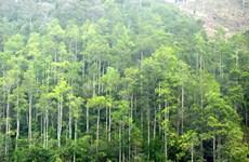Provincia norvietnamita desarrolla economía forestal sostenible y eficaz