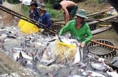 Exportaciones acuícolas de Vietnam siguen en recuperación