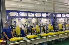 Empresa vietnamita envía primer lote de arroz libre de impuesto a la Unión Europea