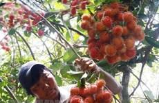Llegará mañana a Vietnam experto estadounidense de cuarentena vegetal
