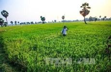 Hanoi impulsa el desarrollo cadena de producción y consumo de productos