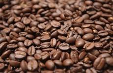 Indonesia ambiciona convertirse en segundo mayor productor de café en el mundo