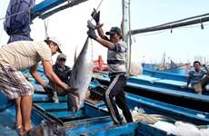 Garantizan seguridad de pescadores en medio del COVID-19