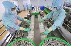 Crecen exportaciones de camarones de Vietnam a la Unión Europea