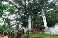 Antiguo baniano en templo de Tan Vien Son Thanh, tesoro verde con miles de año