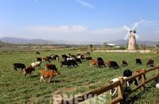 Vinamilk proyecta expandir las granjas de vacas lecheras