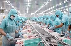 Producción y exportaciones vietnamitas de pescado Tra enfrentan desafíos