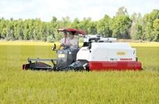 Exportará provincia survietnamita 126 toneladas de arroz a Unión Europea