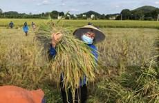 Vietnam traza 17 objetivos de desarrollo sostenible hasta 2030