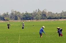 Provincia de Kien Giang se concentra en productos agrícolas