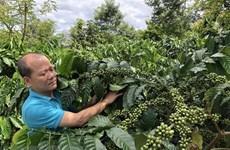 Aumentan exportación agrícola de Vietnam a UE tras entrada en vigor de EVFTA