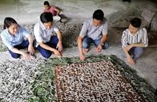 El cultivo de moreras para criar gusanos de seda ayuda a estabilizar economía en áreas remotas