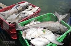 Especialistas advierten disminución grave de reserva de peces en el Mar del Este