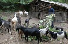 Provincia vietnamita de Kien Giang avance en reducción de pobreza sostenible