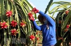 India y Vietnam disponen de grandes potencialidades para promover exportaciones de frutas