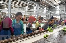 Proyectos agrícolas en Camboya facilitan a trabajadores de origen vietnamita