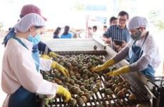 Exportaciones de verduras de Vietnam disminuyen en primeros nueves meses de 2020