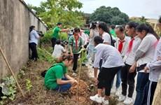 Campaña para reverdecer Hanoi con cuatro mil árboles
