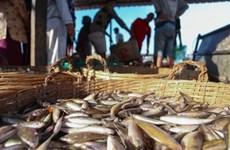 Disminuyen exportaciones de productos acuáticos de Camboya