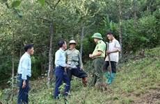Política de protección forestal mejora la gestión de bosques en Vietnam