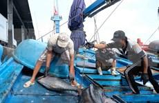 ASEAN Today destaca esfuerzos de Vietnam en la lucha contra la pesca ilegal