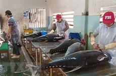 Exportaciones de atún de Vietnam a Italia registraron aumento de 8,5 por ciento en septiembre