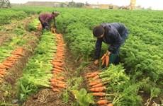 Provincia vietnamita de Bac Ninh moviliza capitales asistenciales a agricultores
