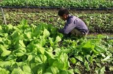 Vietnam fomenta desarrollo de agricultura orgánica