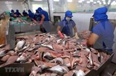 Grupo vietnamita exporta pescado Tra fabricado con alta tecnología