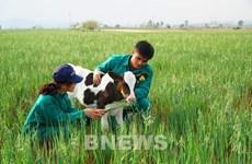 Vinamilk importa mil vacas lecheras de Estados Unidos