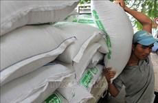 Exportaciones de arroz camboyano con fuerte aumento de enero a octubre