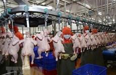 Venderán pollo vietnamita en Singapur y Hong Kong
