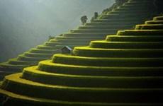 Mu Cang Chai elegido en el top 50 destinos más bellos del mundo en 2020