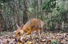 Vietnam intensifica cooperación en preservación de la biodiversidad
