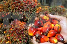 Indonesia pide a UE terminar discriminación contra productos de aceite de palma
