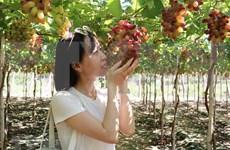 Expertos vietnamitas proponen soluciones para favorecer exportación de productos agrícolas en el contexto del COVID-19