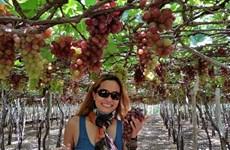 Grandes avances de provincia de Ninh Thuan en el turismo agrícola