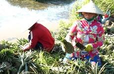 Efectuarán Congreso Nacional de la Alianza de Cooperativas de Vietnam