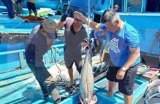 Provincia vietnamita de Kien Giang refuerza medidas contra pesca ilegal