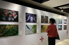 Concurso fotográfico expresa los colores vívidos de la cultura vietnamita