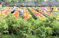 Aumentará siembra de flores y plantas ornamentales en Dong Thap