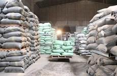 Mejoran calidad y competitividad del arroz de Vietnam